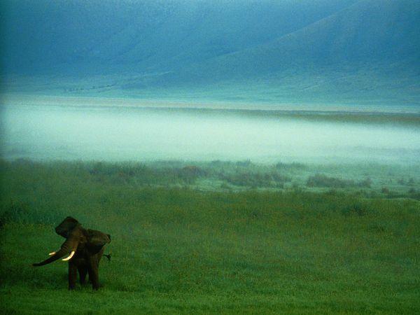 Natgeo_african-elephant-tanzania
