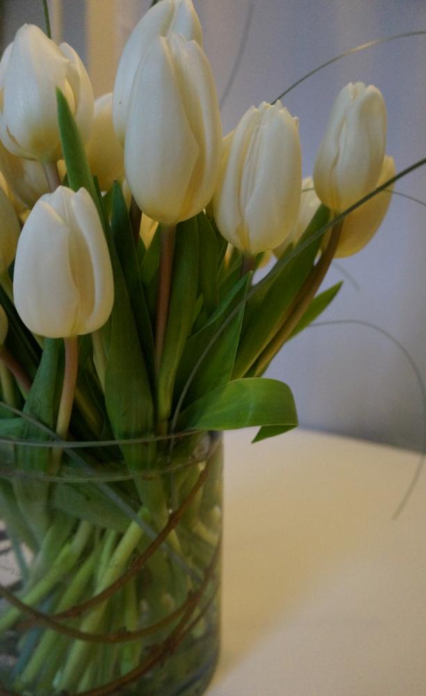 Winter-white-tulips
