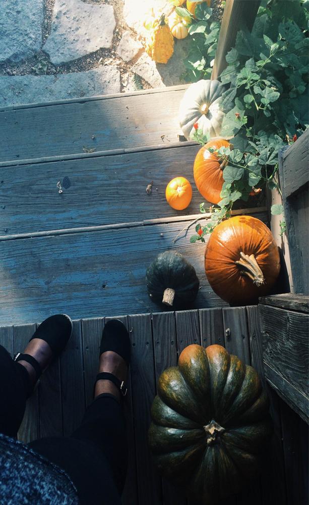 Stoop-pumpkins-austin